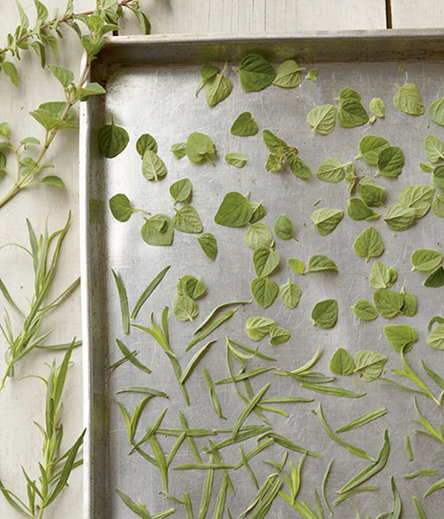 When drying herbs such as tarragon and oregano in a warm (90°F) oven, check them after 2 hours