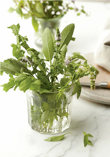 To store fresh herbs that will be used within a day or two, such as sage or mint, stand them up in a glass of cool water