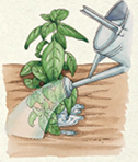 STEP 4: Water well, so that the soil is soaked, ensuring that the roots receive enough water to encourage new growth