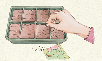STEP 1: Starting herbs from seeds. To start seeds in trays, sprinkle the seeds evenly over the surface of your moistened medium