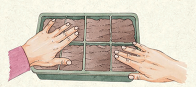 STEP 2: Cover the seeds with more planting medium, according to the specifics on the seed packets