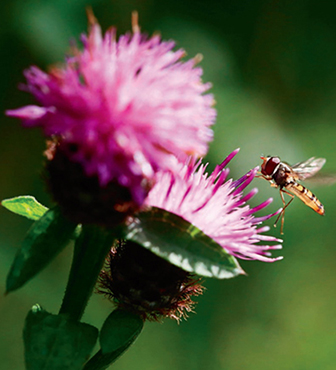 Beneficial insects are a boon to any garden, and herbs are among the best plants for attracting them