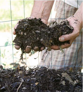 Recycling yard and kitchen waste as compost creates fertile growing material for herbs and other plants