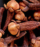 Clove trees thrive in humid, tropical conditions with well-drained, fertile soil and full sun or partial shade