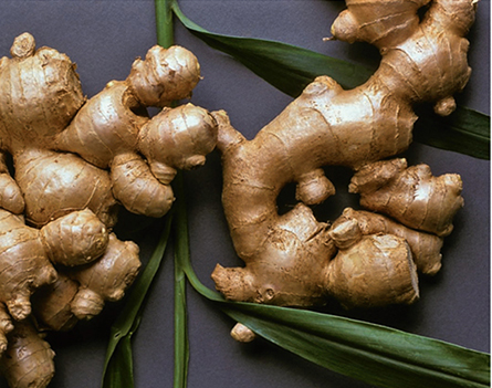 Ginger thrives in well-drained, humus-rich soil in sun or partial shade