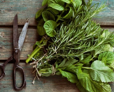 Harvesting herbs