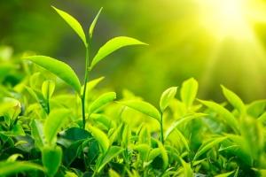 Herbal Botany